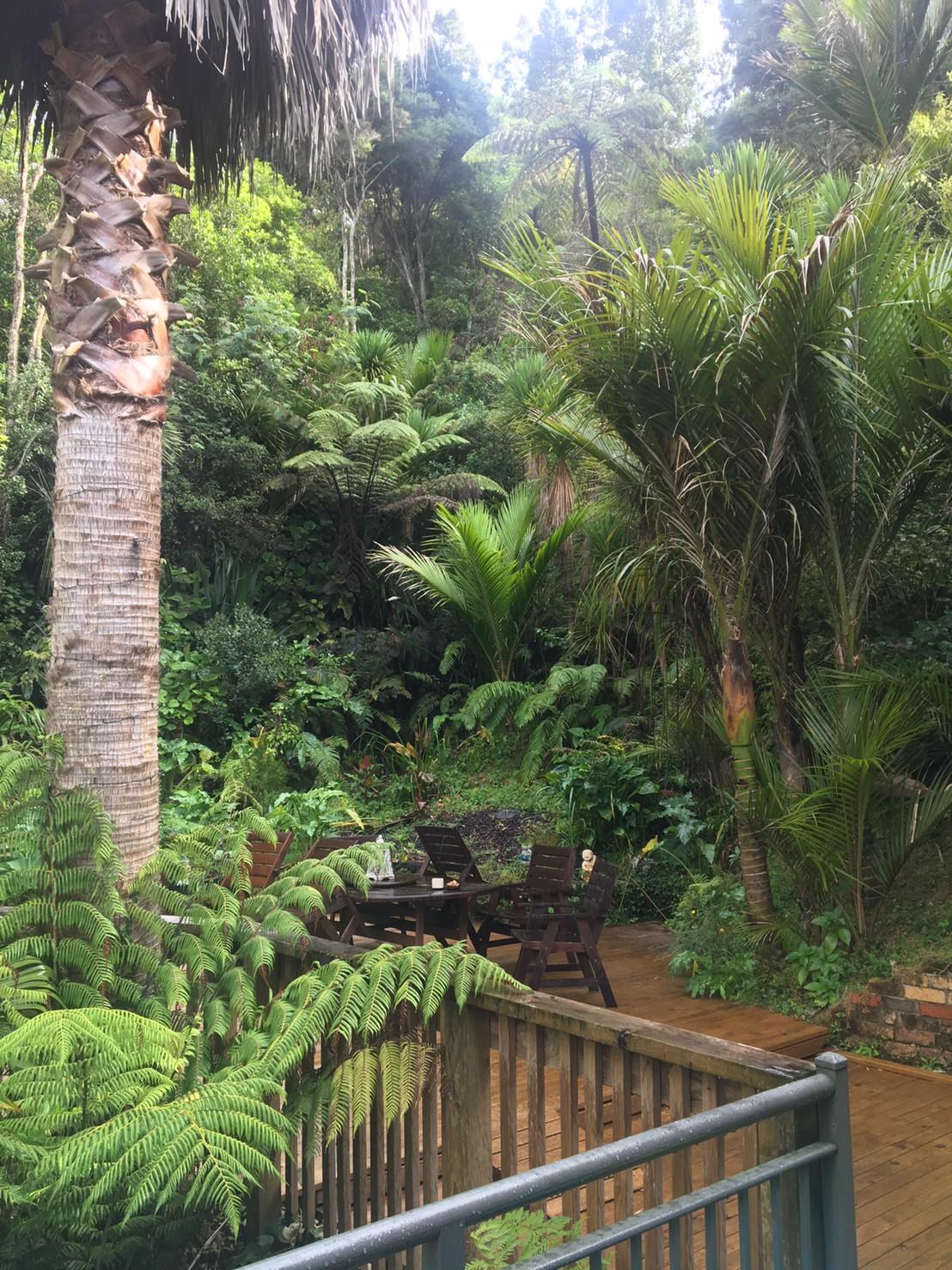 ステイ先の家の裏庭