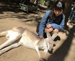 日本人女子留学生がカンガルーを撫でている
